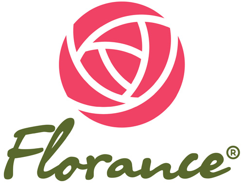 Retail roses sale from Producer / florance.ua